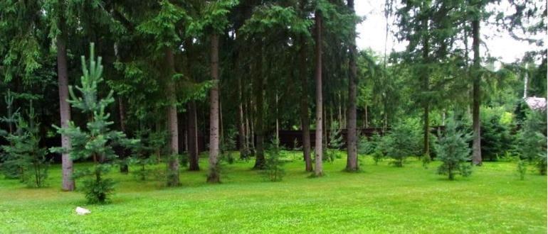 Аренда земельных участков лесного фонда