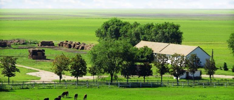 Аренда земли сельхозназначения у государства