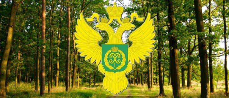 Услуги по аренде лесных участков