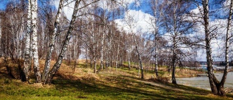 Перевод земель сельхозназначения в земли лесного фонда