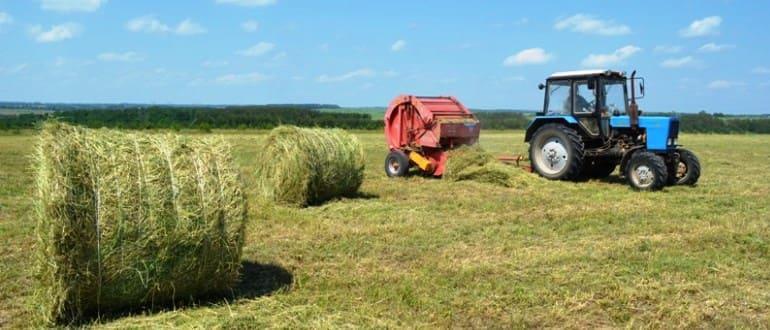 Вид разрешенного использования крестьянско фермерское хозяйство