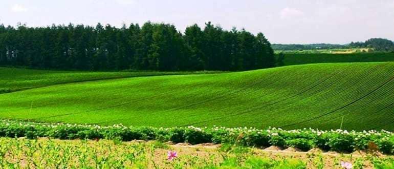 Земли для сельскохозяйственного производства